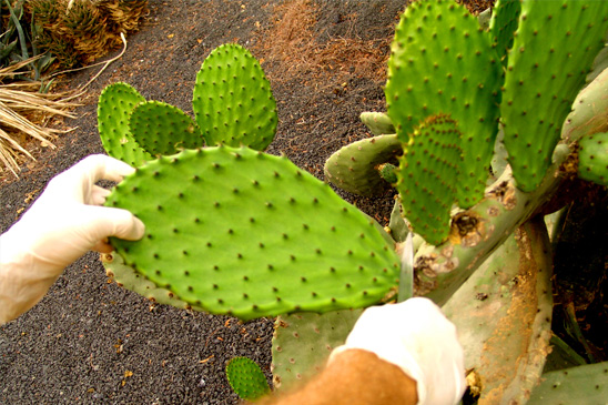 Leave-Cutting-Cactus-Detox-Retreat