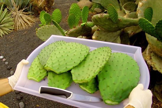 Cactus-Detox-Retreat-Cactus-Tray