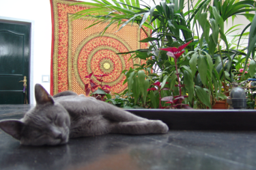 kalindi-lanzarote-gato